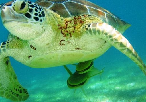 http://sensatoliving.com/wp-content/uploads/2016/12/cropped-Turtle.jpg